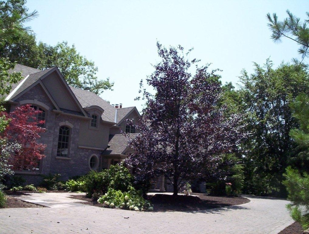 Quality Trees And Services   Douglas Wood Large Tree Services
